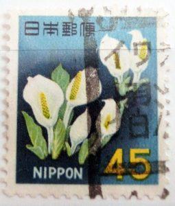 ミズバショウ45円アキタ摺沢局